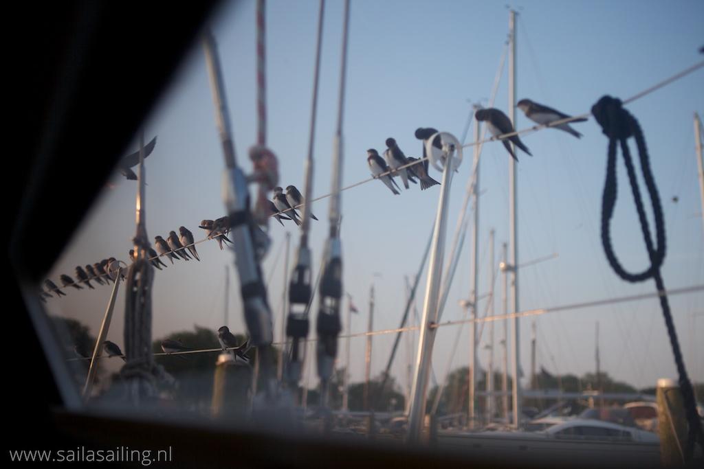 Zwaluwen op de reling