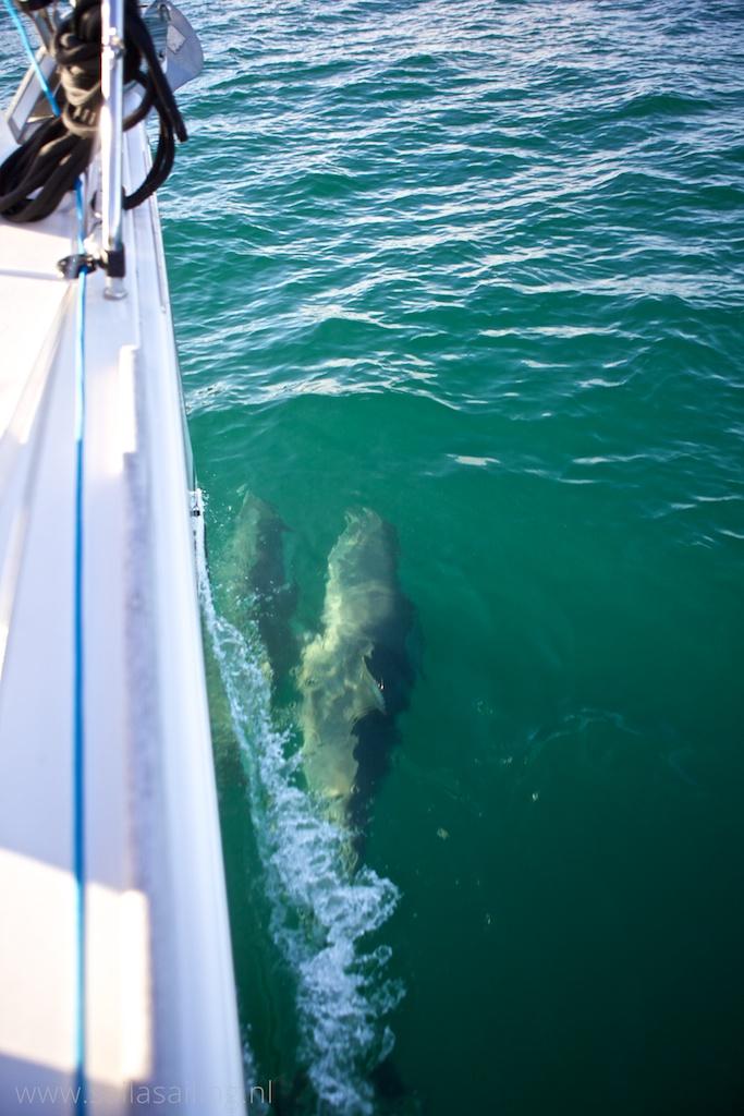 Bezoek van de dolfijnen